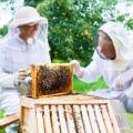 Sector apícola, apicultura